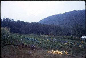 Johnson Pasture Commune: Field, with squash harvest in foreground