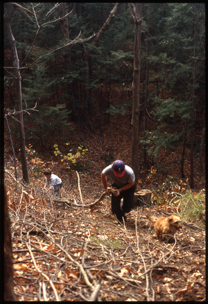 Wendell Farm: Dan Keller and child, dog, dragging wood through woods, Wendell