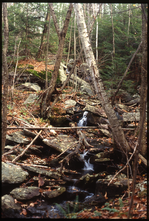 Wendell Farm: Stream in the woods, Wendell, linking to the digital object