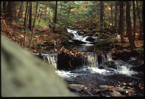 Wendell Farm: Stream in woods, Wendell