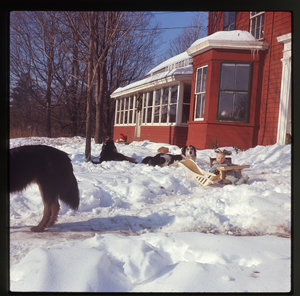 Montague Farm: Dogs and baby (Eben) in snow in front of house, Montague