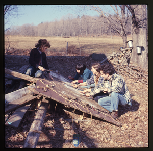 Montague Farm: Skin curing and stretching (unidentified participants), Montague