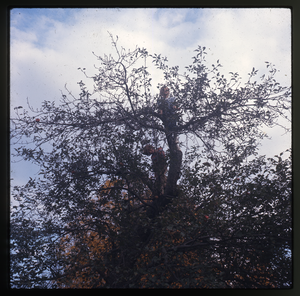 Montague Farm: Two kids climbing high in a tree, linking to the digital object