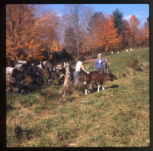 Montague Farm: Nina and mother leading a calf in pasture, Montague