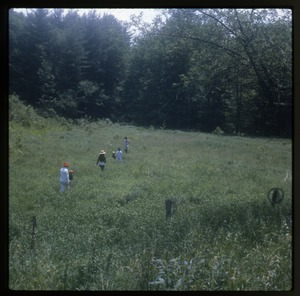 Wendell Farm: Walking through meadow, Wendell