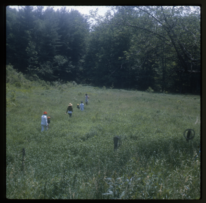 Wendell Farm: Walking through meadow, Wendell, linking to the digital object