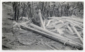 A man splitting off the outer part of a petiole from a stalk of aboca. The part he splits off is called a 'tuxe' and is later stripped of its pulp to leave the fiber, known as Manila hemp.  Calian, Davao.