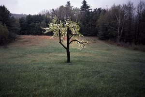 Wendell (Mass.) Bicentennial Celebration: flowering apple tree in field