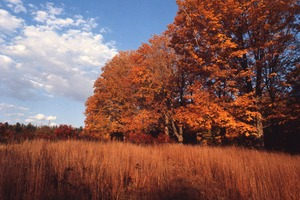 Wendell (Mass.) Bicentennial Celebration: field and trees in fall color