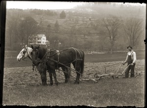 Man plowing the fields at the Hillside School (Greenwich, Mass.)