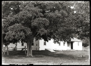 House among shade trees (Greenwich, Mass.)