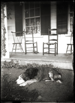 Dog asleep on the ground in front of porch (Greenwich, Mass.)