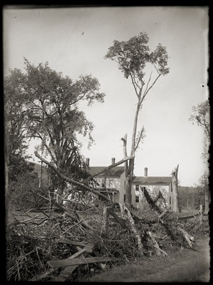 Tree damage in front of Brooks-Fewell House (Greenwich, Mass.)