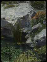 First page of Falmouth (rocks, water- plants in water and rock crevices