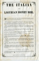 First page of The  Italian or Ligurian honey bee