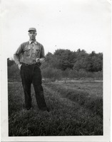 First page of Duxbury Cranberry Company: Kenneth G. Garside in work clothes, standing on a bog with his pipe