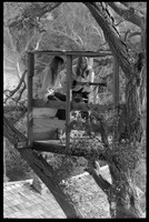 First page of Joni Mitchell seated in her tree house in Laurel Canyon with Judy             Collins, with guitar