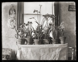 First page of Potted plants, Massachusetts Agricultural College