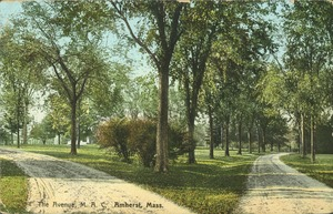 First page of The  Avenue, M.A.C., Amherst, Mass.
