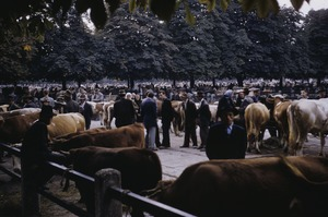 Thumbnail of Livestock trade at peasant market