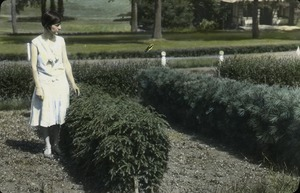 Thumbnail of Canada hemlock: woman standing next to hedge