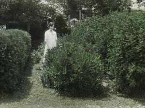 Thumbnail of Bayberry , Caragana, and Arbor vitae (women, hedges)
