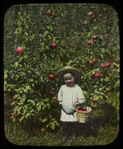 Thumbnail of Child with basket and dwarf apple tree