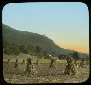Thumbnail of Mount Tom from the Northwest (tied up corn stalks and barn in field at base of mountain)