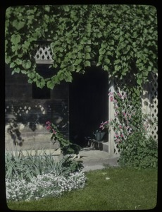 Thumbnail of Old Deerfield (trellis, grapevine?, alyssum, iris and other flowers)