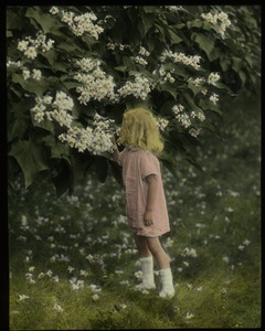 Thumbnail of Mrs. Cowan's garden (young girl examining catalpa flower)