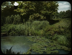 Thumbnail of Private garden, designed by Jens Jensen (aquatic plants beside pond)