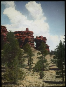 Thumbnail of Pine trees, red rock formations