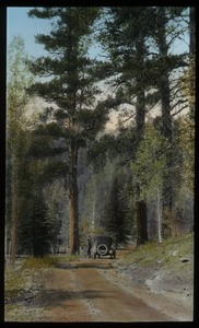 Thumbnail of Kaibab Forest, Arizona (auto on road through forest)
