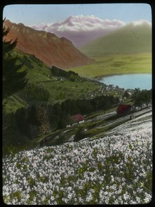 Thumbnail of Poet narcissus - Switzerland (flower covered hill looking down into valley with town and lake, mountains in background)