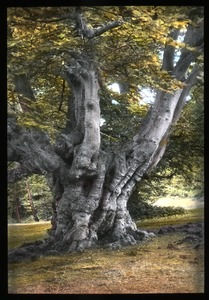 Thumbnail of Burnham Beeches
