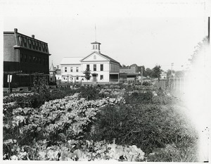 Thumbnail of Community garden with meetinghouse in background