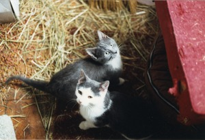 Thumbnail of Woodrow and Muffin in their room at the Horse Barn