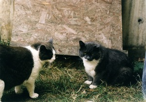 Thumbnail of Ashes and the Dadcat (l. to r.)