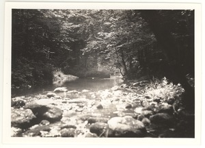 Thumbnail of Sun through leaves on Brandy Brook [Remember Brandy Brook?]