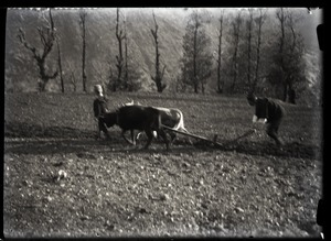 Thumbnail of Work Tilling a field [with two oxen]