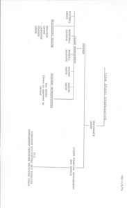 Thumbnail of Organizational chart for Team Sports Organization