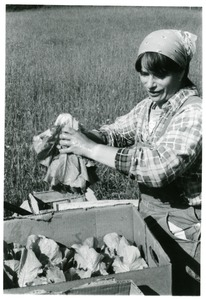 Thumbnail of Grace Gershuny harvesting lettuce