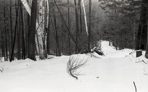 Thumbnail of Snow-covered path in the Warwick woods