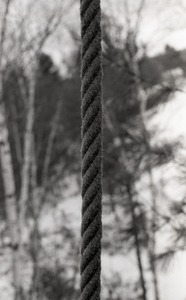 Thumbnail of Rope, hanging from a tree in snow-covered woods