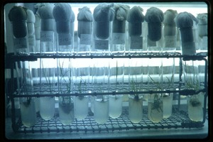 Thumbnail of Shanghai Academy of Agricultural Sciences: test tubes in a rack