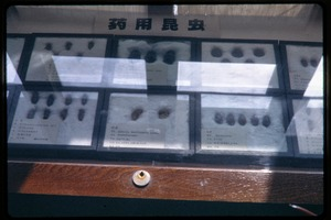 Thumbnail of Chinese Academy of Sciences, Institute of Zoology: mounted beetle specimens