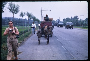 Thumbnail of Man driving a heavily-laden horse cart along highway