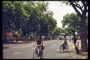 Thumbnail of Men bicycling down a tree-lined street