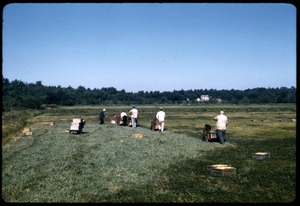 Thumbnail of Cranberry harvest: line of mechanical pickers working down the bog; Duxbury Cranberry Company