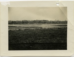 Thumbnail of Duxbury Cranberry Company: Bog no. 12, at Rte. 14, near the pump house